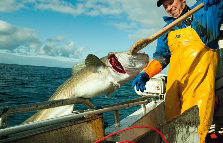 Die-Familiensache-Fisch-Fischer-DeutscheSee