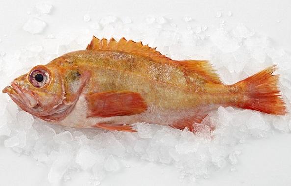 Wie-lagere-ich-Fisch-richtig-Frischfisch-Tipps-von-Profis-780x501