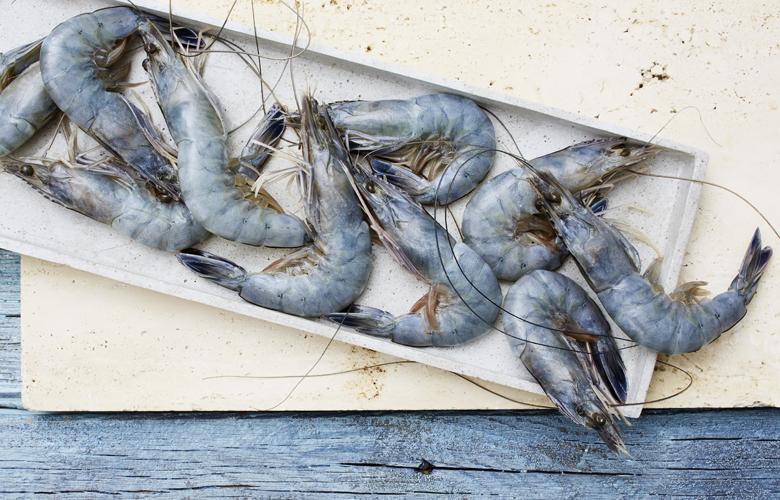 Kleine-Garnelenkunde-Wissen-Fisch-und-Genuss-Blaue-Garnelen-780x500