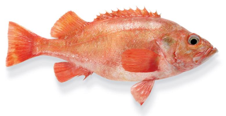 Butter-bei-die-Fische-die-Fakten-zum-Fett-Rotbarsch-Mittelfette-Fische-Wissen-Fisch-und-Ernaehrung-780x550