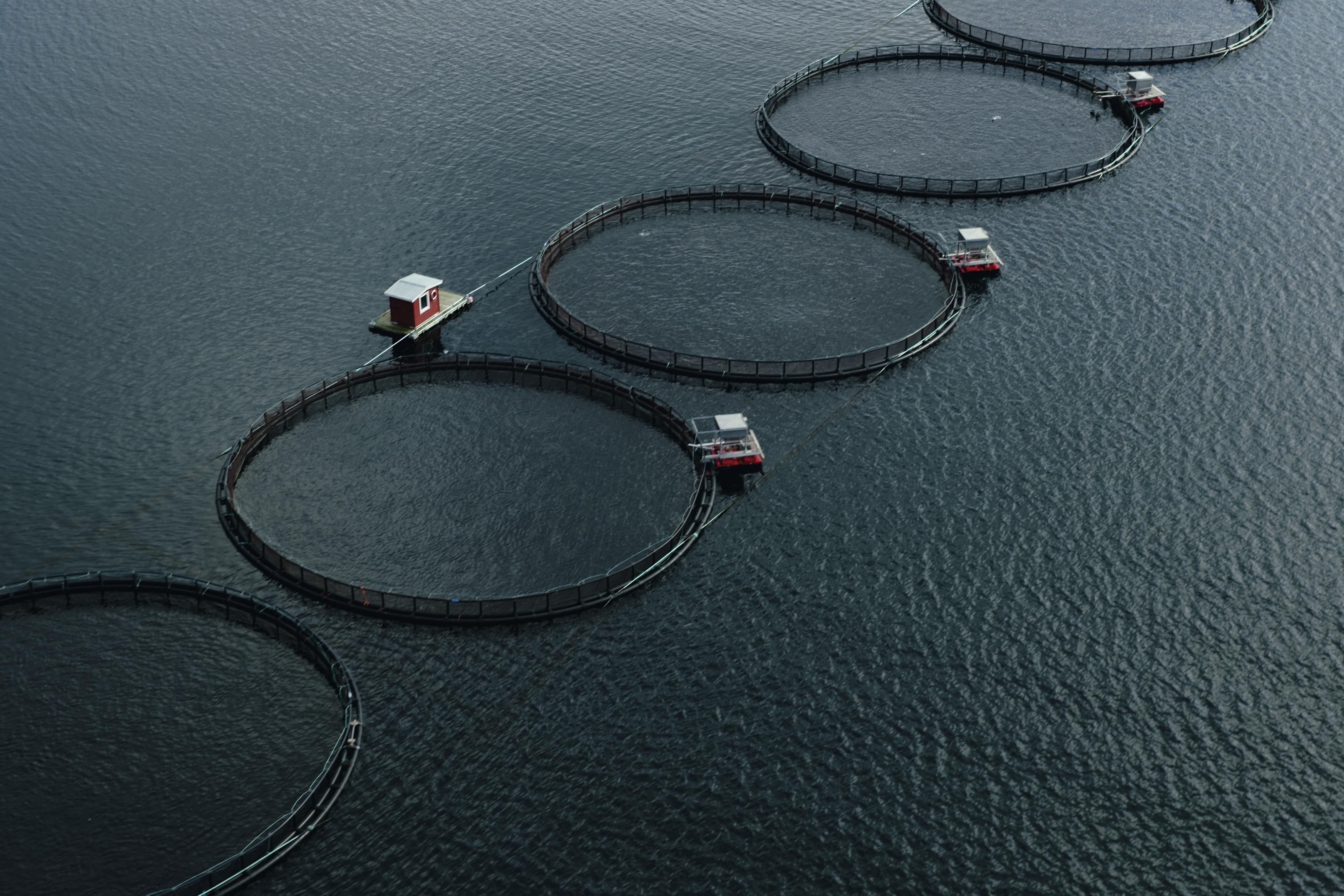 Norwegischer-Lachs-aus-Aquakultur-Fischfang-und-Aquakultur