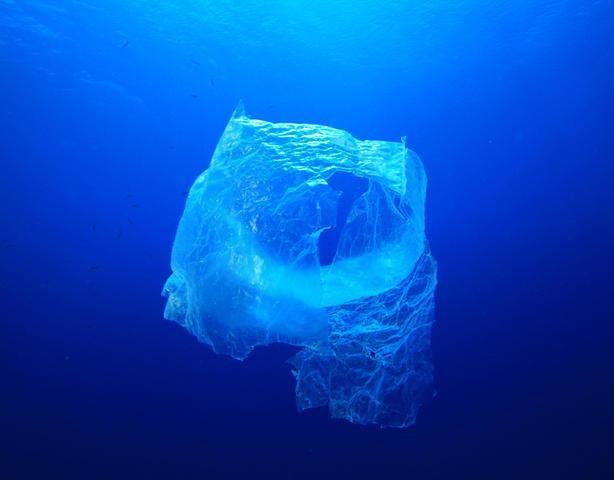 Gemeinsam gegen die Verschmutzung der Meere