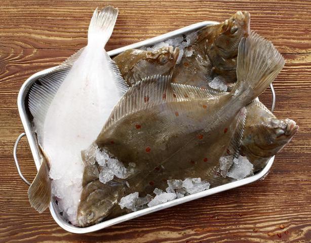 Quiz zum Tag der Fische