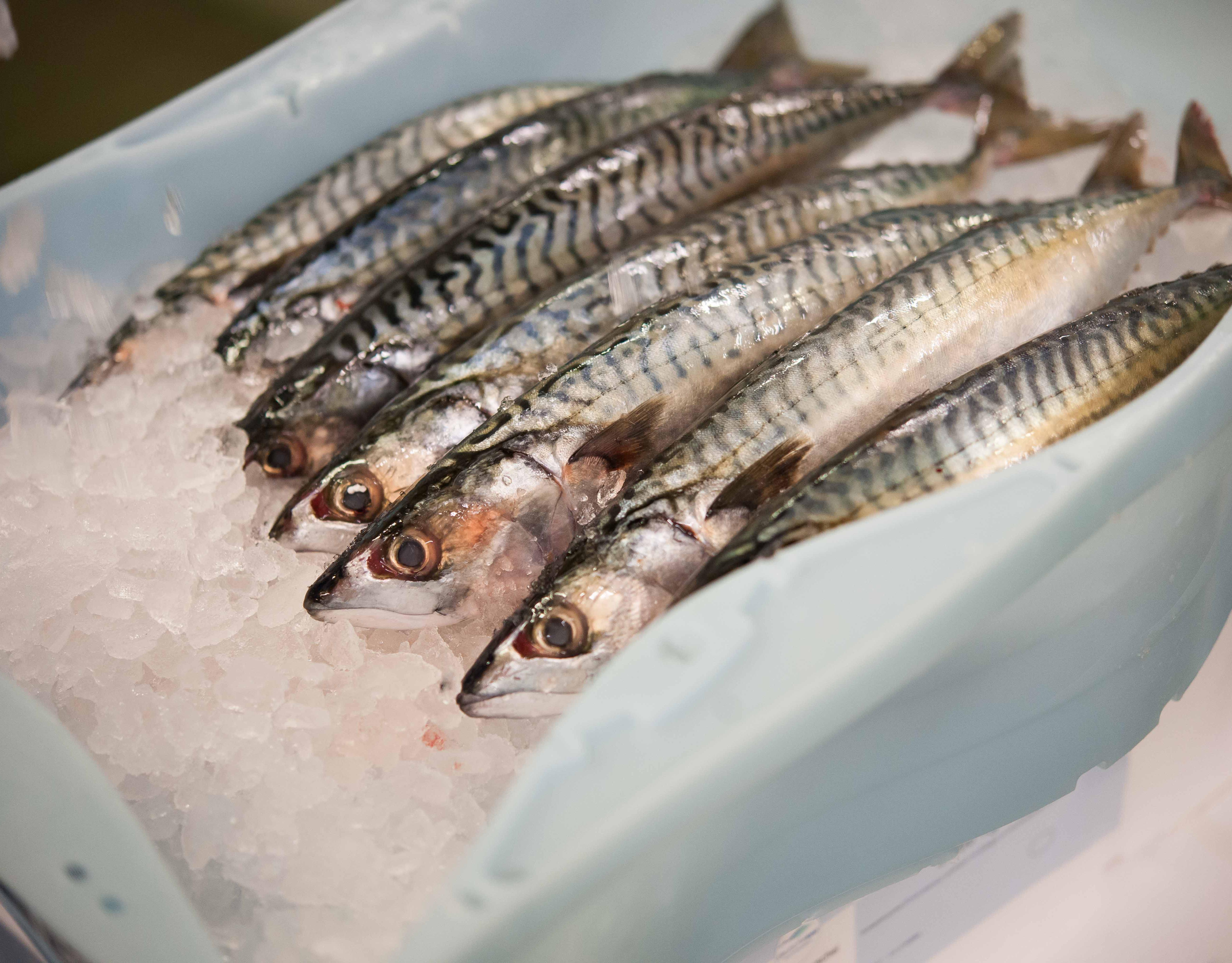 Fischfang & Aquakultur
