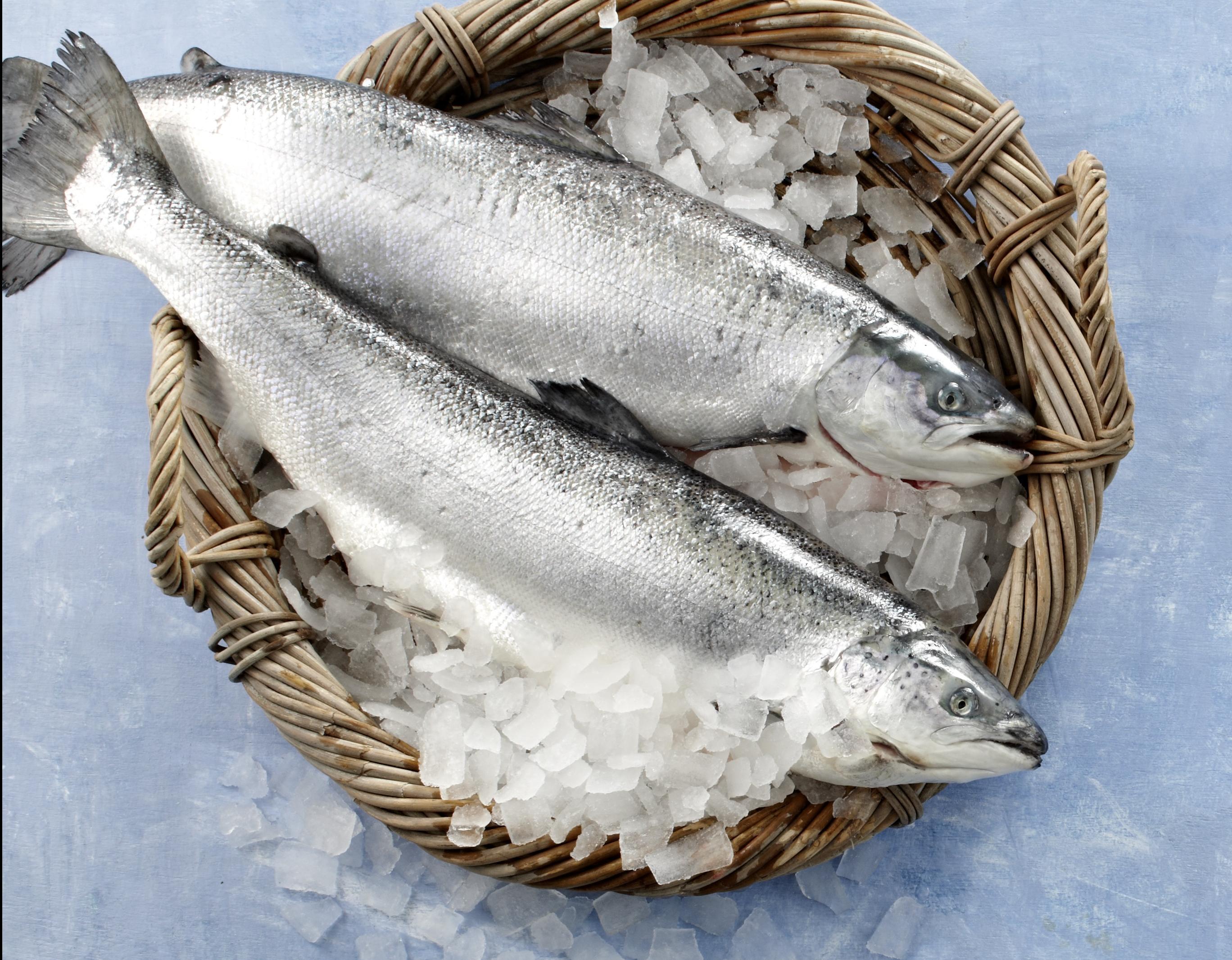 Fisch in der Ostertradition