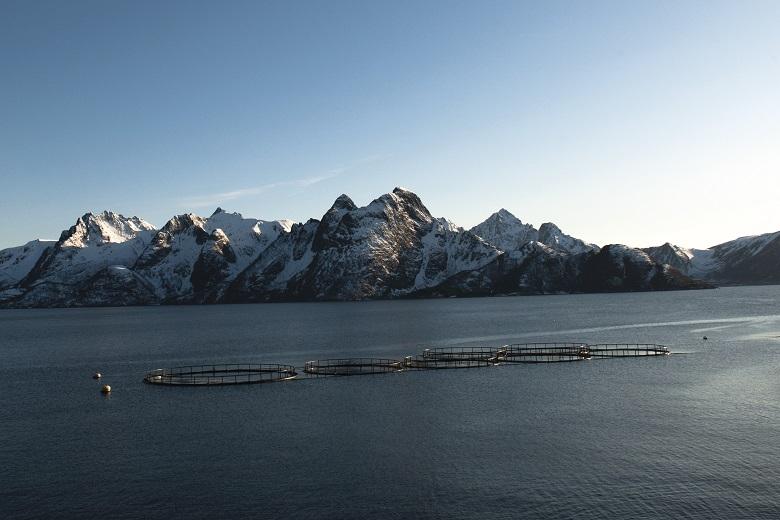 Fjordforelle-Herkunft-Produkte-Fische