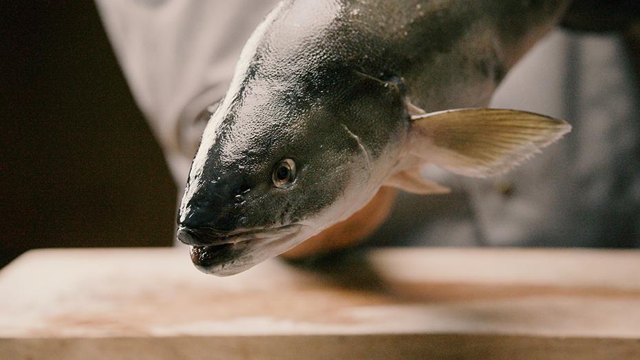 Black_Cod-Kohlenfisch-Kopf-Mood