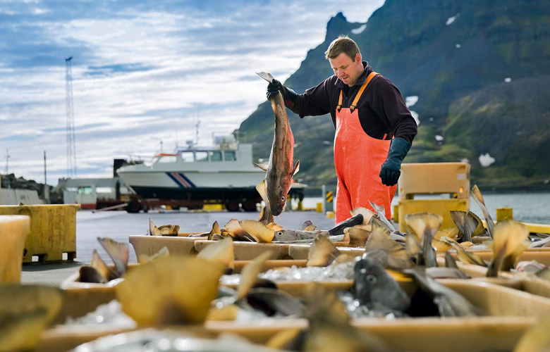 Islynt-natuerlich-bester-Fisch-Produkte-Spezialitaeten-Handselektiert-Fischer-780x500