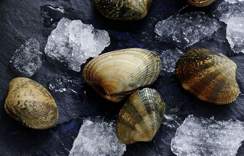 Venusmuschel-Wissen-Fischspezialitaeten-kleine-Muschelkunde-780x500