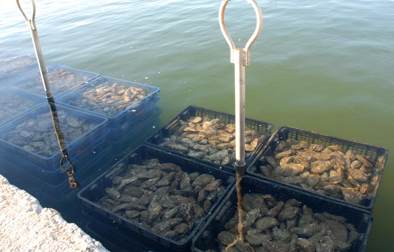 Austern-Herkunft-Produkte-Meeresfruechte-780x500