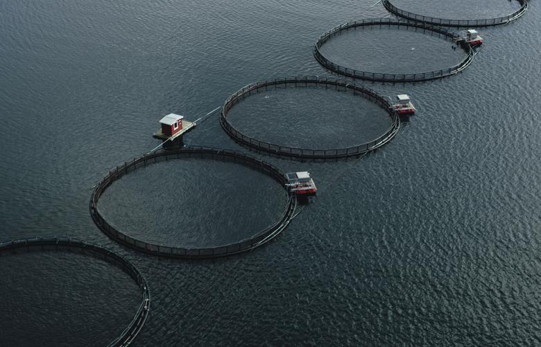 Lachs-Herkunft-Produkte-Fische-780x500