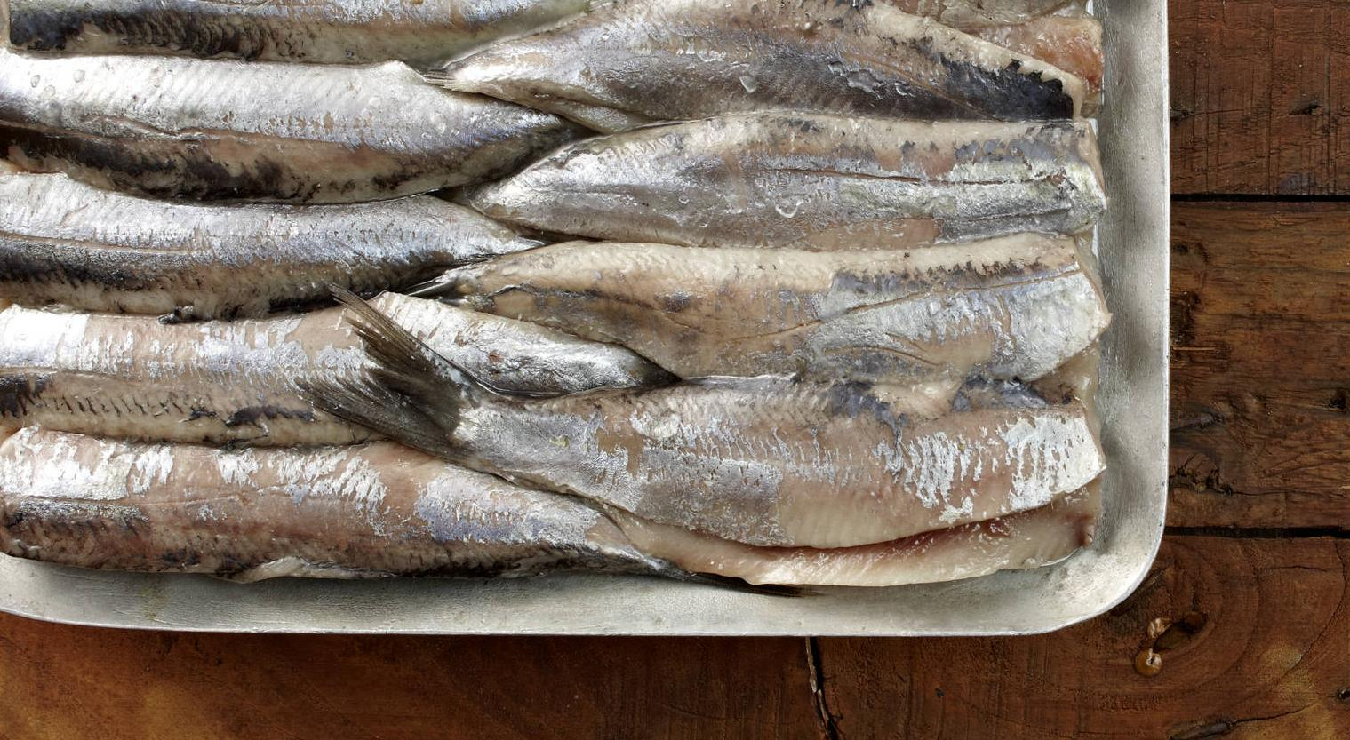 Viel mehr Fisch im Meer Datingwebsite