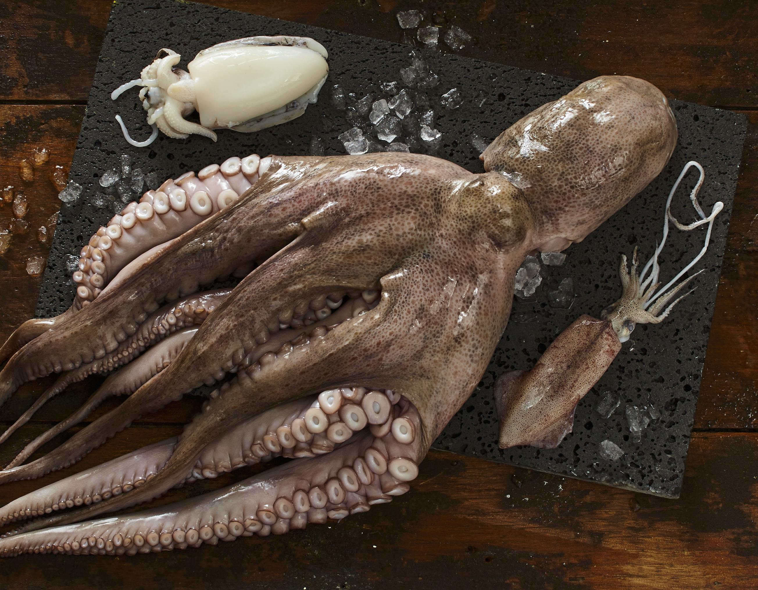 Die Welt der Tintenfische
