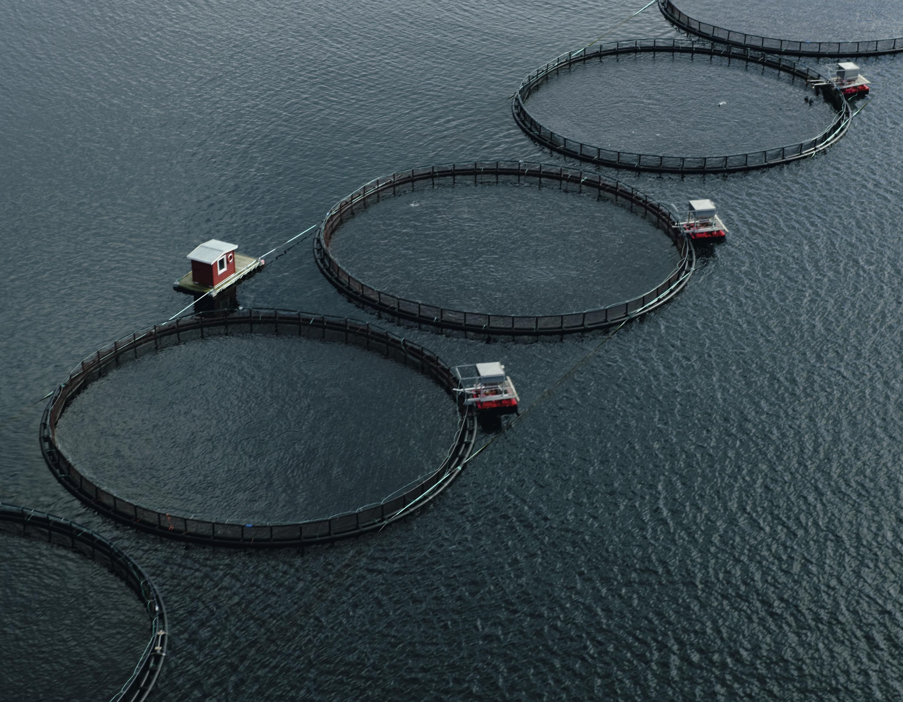 Norwegischer Lachs aus Aquakultur