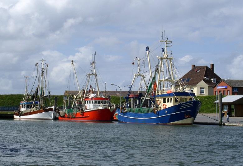Nordseekrabben-Herkunft-Produkte