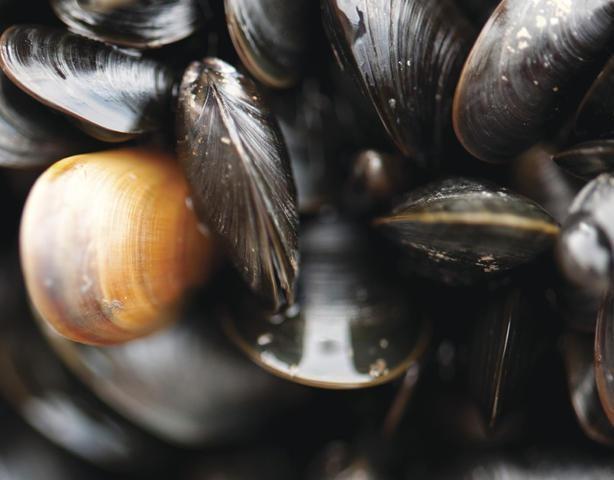 Muschelzeit in der Gastronomie