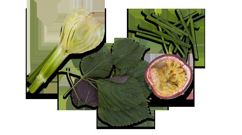 Lachs-roh-mariniert-Aromen-kombinieren-Rezepte-Lachstatar-Fenchelknolle