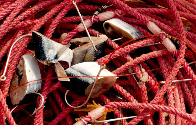 Die-Familiensache-Fisch-Seile-DeutscheSee