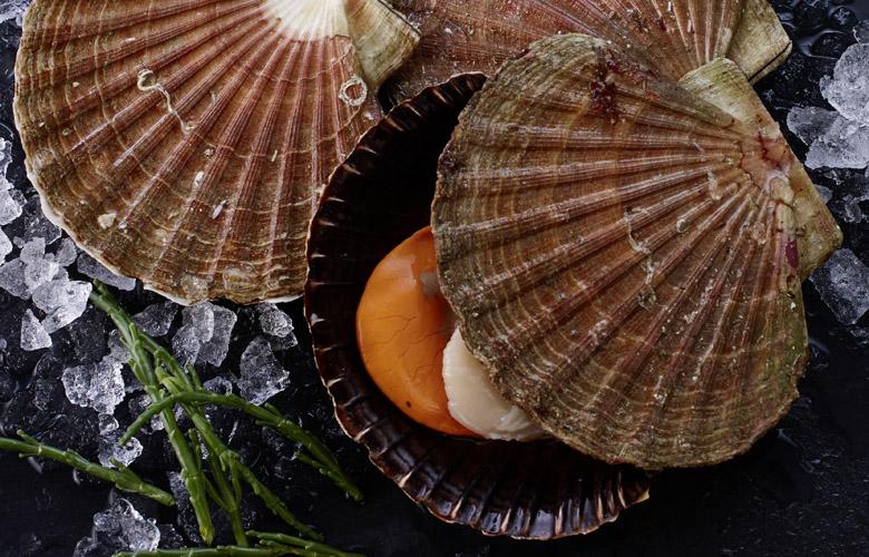 Jacobsmuschel-Wissen-Fischspezialitaeten-kleine-Muschelkunde-780x500