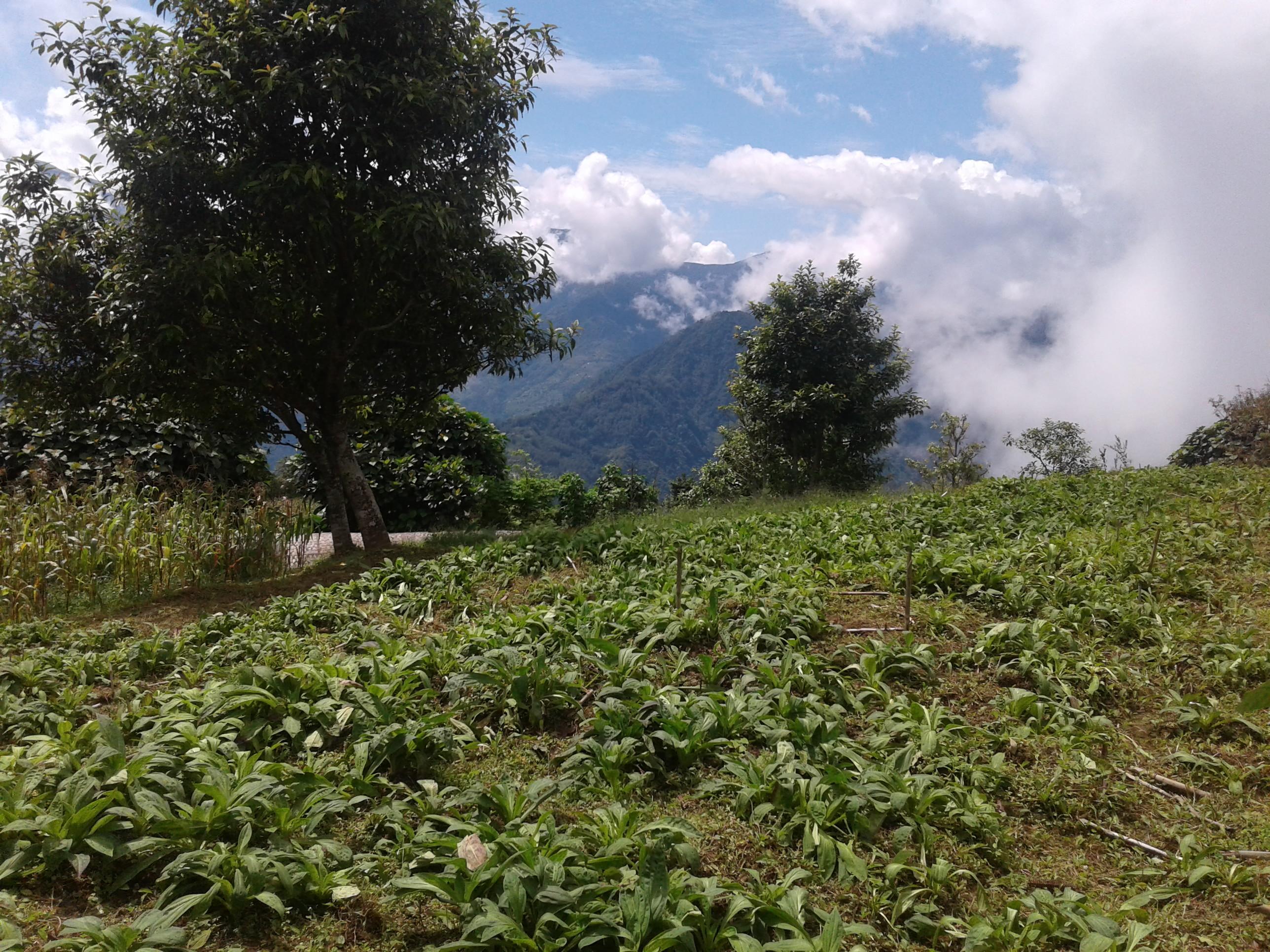 Desh Bahadur Tamang