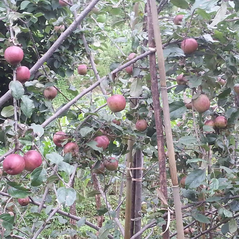 Solukhumbu Agro Farm