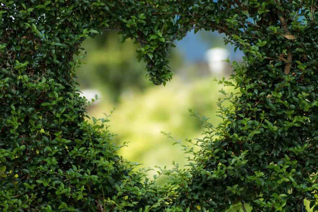 Bild von einem Herz in einer Hecke