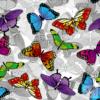 Dzianina PUL – Motylki
