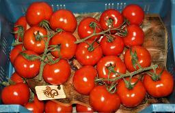 Strauch-Tomaten