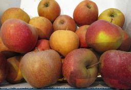 Apfel Booskop