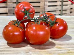 Tomate, Rispentomate