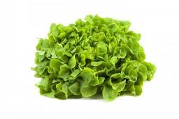 Eichblatt grün Salat