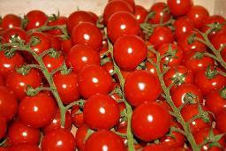 Coctail-Tomaten