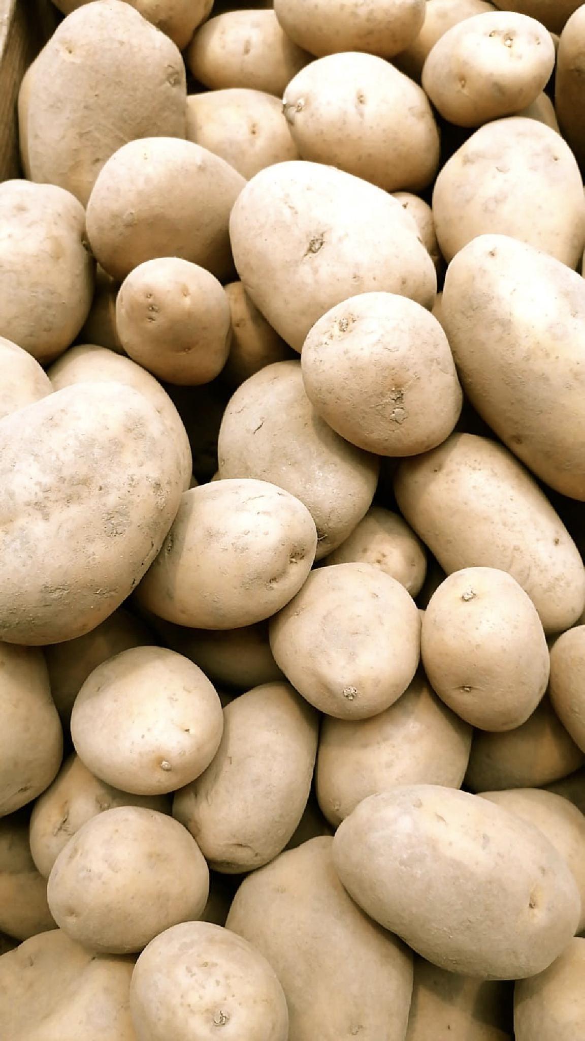 Wetterauer goldgelbe Kartoffeln Belana