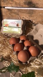 6 XL Eier aus Freilandhaltung
