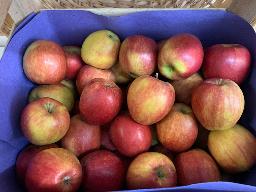 Äpfel: Braeburn