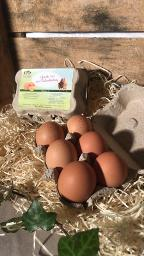 6 L Eier aus Freilandhaltung