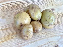 Kartoffeln Annabell festkochend