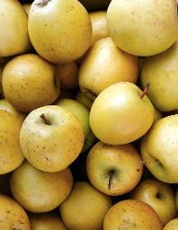 Apfel Gold Rush