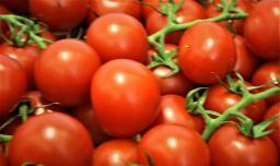 "Tomaten ""Rote Perle"""