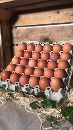 30 L Eier aus Freilandhaltung