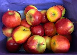 Äpfel: Jonagold