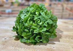 Eichblatt Salat