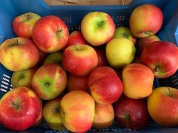 Äpfel: Elstar