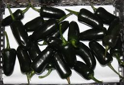 Chili-Schote, grün, scharf