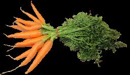 Karotten Bund