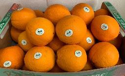 Bio - Orangen