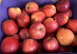 Äpfel: Gala Royal