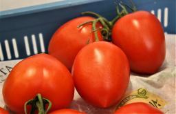 Roma-Strauch Tomaten