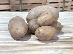 Kartoffeln Melodie mehlig kochend
