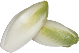 Chicoree
